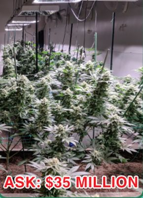 STANDARD CULTIVATION AND PROCESSING SPACE FOR SALE