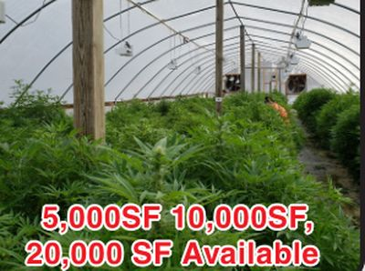 CANNABIS CULTIVATION AND PROCESSING OPPORTUNITIES