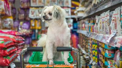 Pet Shop For Sale in Tampa