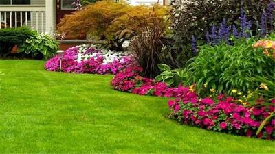 Pest Control and Lawn Spray Business for Sale in Tampa