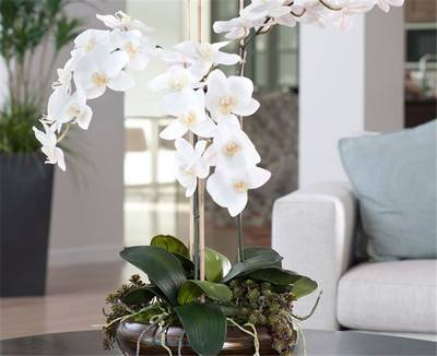First Class Interiorscapes Plant Company for Sale in Palm Beach County
