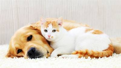 Luxury Pet Day Care & Boarding Business for Sale in Martin County