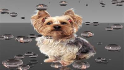 Profitable Pet Grooming Spa for Sale in SW Broward