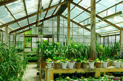 GREEN HOUSE BUSINESS FOR SALE