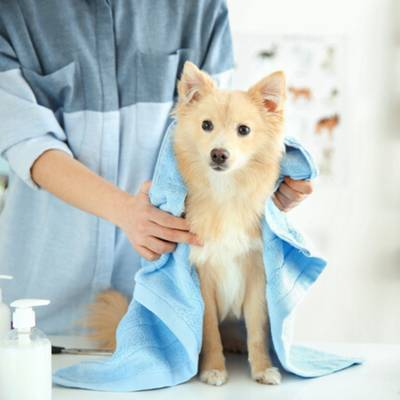 Essential & Profitable Pet Grooming Business for Sale