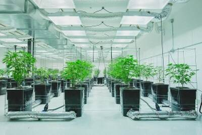 Brand New Cannabis Production Facility for Sale in Fraser Valley, BC