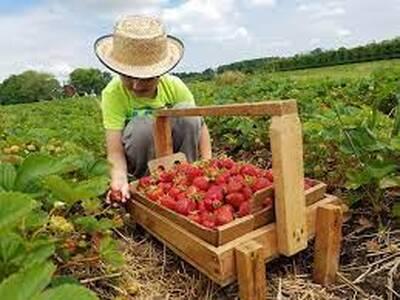 FRUIT FARM FOR SALE