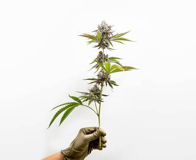 Cannabis Retail Franchise - 23 Locations Available  - $599,000