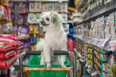 Prime Location Pet Store and Grooming Service Business for Sale in BC