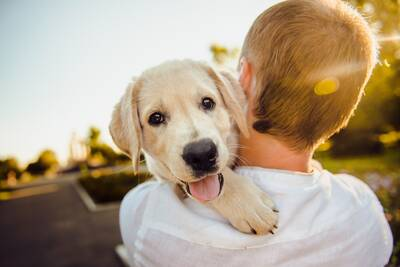Well Established Dog Daycare/Boarding/Grooming Business Newmarket